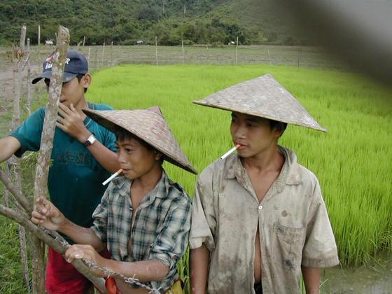 ילדים עובדים בשדה, לאוס.