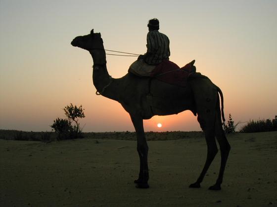 טיול גמלים, רג'סטאן, הודו.