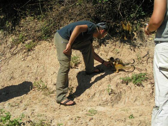 קופים בג'ונגל, בוליביה.