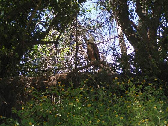 עופות דורסים ומיני ציפורים, פמפס, בוליביה.