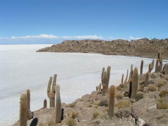 אי הקקטוסים בסלאר, בוליביה.