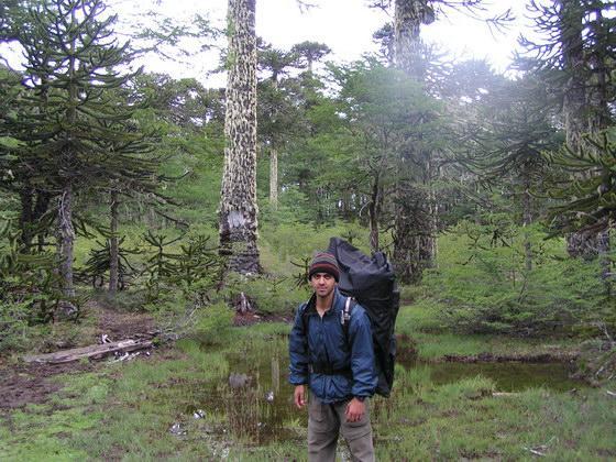 טרק הנמלים סמוך לפוקון, צ'ילה.