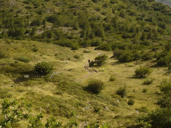 ירוק, טרק הטורוסים, פתגוניה, צ'ילה.