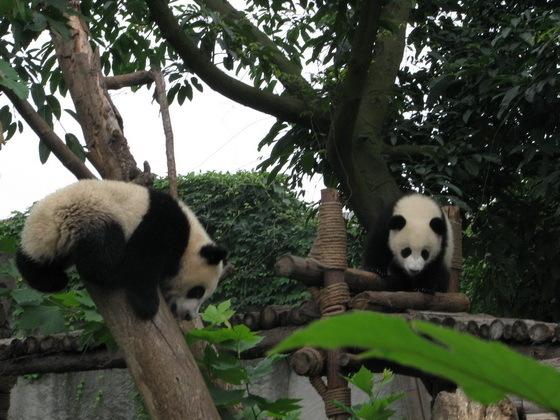 �ובי פנ�ה בסין