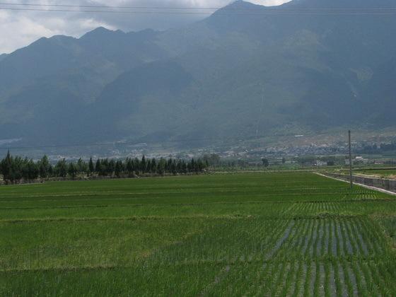 ש�ות אורז לי� �אלי, סין