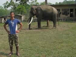 פילים בציטואן