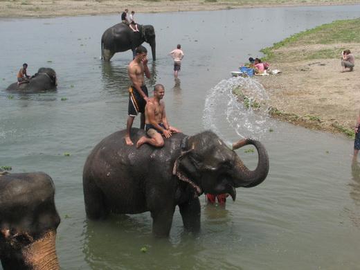 פילים בנפאל