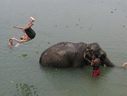 הציטואן פילים