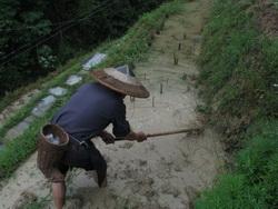 איכר בסין