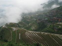 טרסות אורז בסין