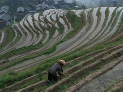 טרסות אורז בדרום סין
