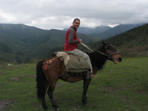 טרק סוסים