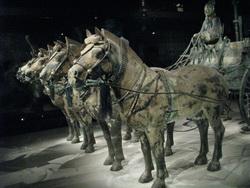 סוסי הטרקוטה