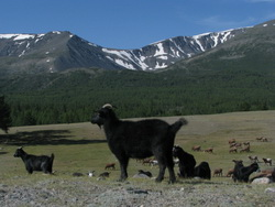 טבע במונגוליה