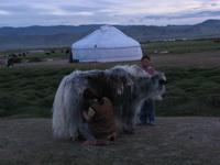 מונגוליה מידע