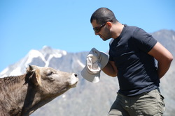 וויכוח עם פרה